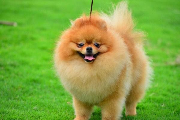 tăng cường sức khỏe cho thú cưng cùng dầu dừa